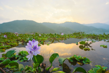 phewa: Phewa lake with mountains on sunset. Phewa lake, Pokhara, Nepal.  Focus on flower. Stock Photo