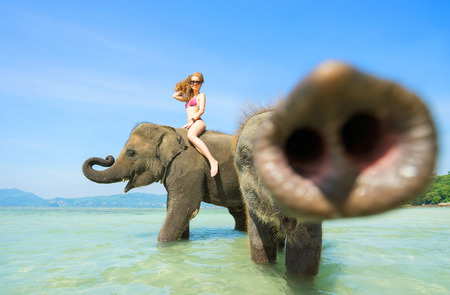 Two elephant and  happy woman in bikini swimming into sea. Smallest give a kiss by trunk in camera. Trunk is blured.