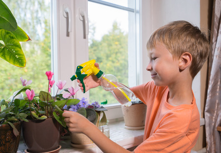 Young boy sprays plants in flowerpots by window. Selective focus. Reklamní fotografie