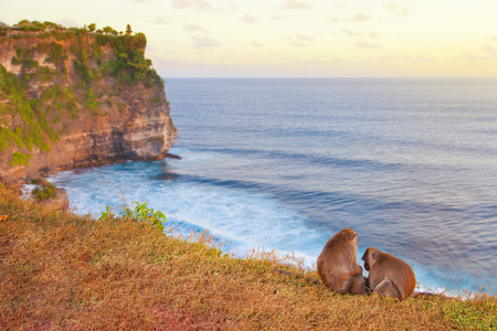 Sunset on Bali island. Monkeys at the temple of Uluwatu on the island of Bali, Indonesia Reklamní fotografie