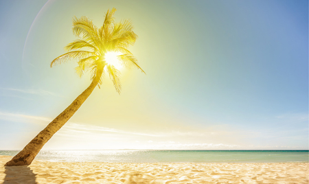 Beautiful beach, sun and palm. Selective focus. Wallpaper.