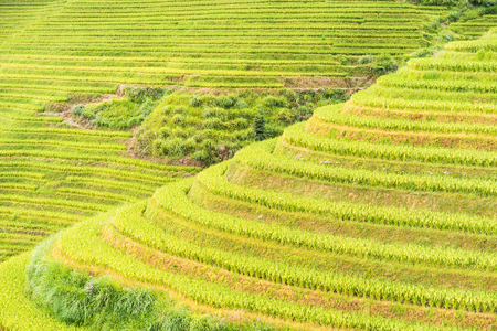 The Longsheng Rice Terraces(Dragons Backbone) also known as Longji Rice. Longsheng