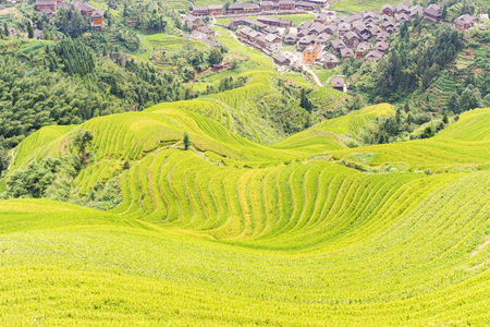Longji Rice terraces on Yaoshan Mountain in Guangxi, China
