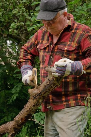 senior male cutting back tree log with axe photo