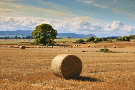countryside landscape with golden straw in farm  photo