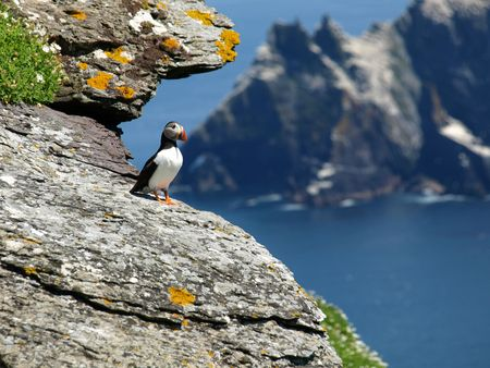 skellig island puffin, ring of kerry, ireland photo
