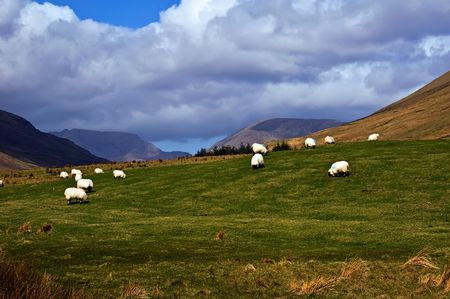 photo of sheep on a mountain side in west ireland Stock Photo - 5967523