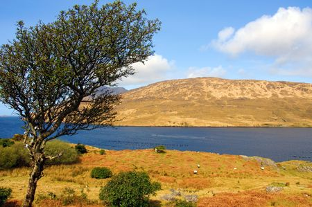 photo scenic landscape of connemara in ireland Stock Photo - 5984100