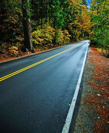 photo rural countryside road through a forest Stock Photo - 5999434