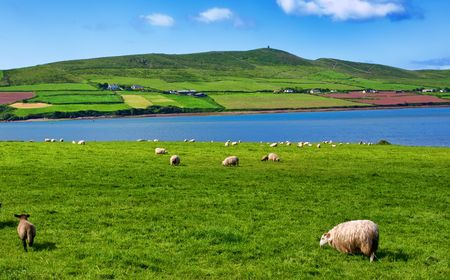 photo sheep in rural landscape for farming photo