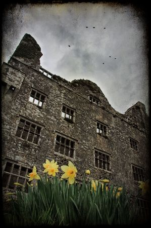photo grunge texture old castle in ireland with daffodils and birds photo