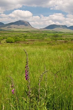 vibrant scenic landscape from the west of ireland Stock Photo - 6564614