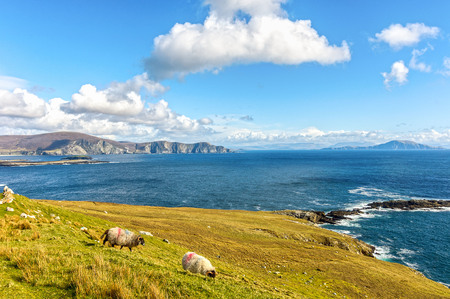 beautiful rural irish country nature sheep landscape from the north west of ireland. scenic achill island along the wild atlantic way. famous irish tourism attraction.