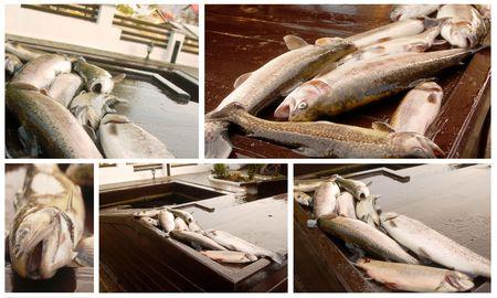 salmonidae: Fresh fish Stock Photo