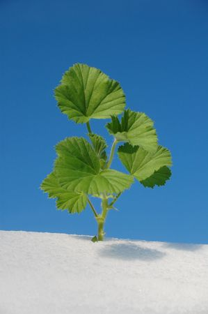 green plant in snow