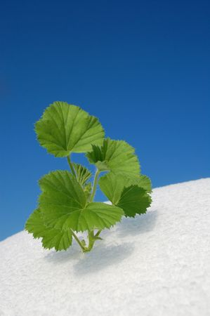 green plant growing in snow