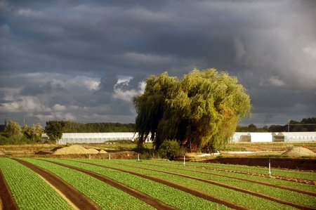 cultivated land near the city Nantes in France