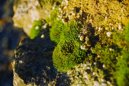 close up photo of moss growing on a stone Banque d'images