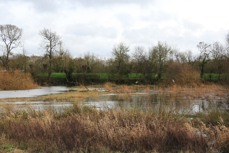 Wildlife reserve of the river Loire in France