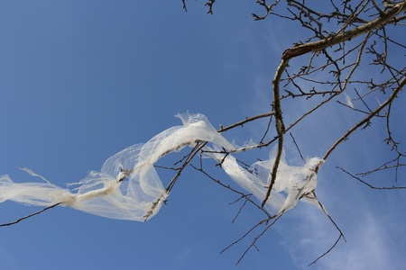 A plastic foil hanging in the branches of a tree