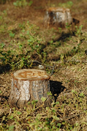 The little plants are ready to grow after the trees was cutted and the sunlight touch the ground. Banque d'images