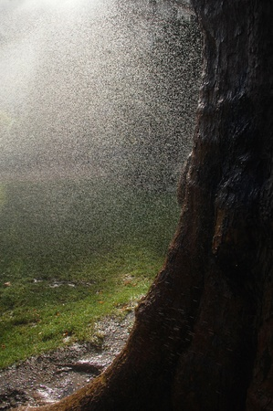 Rain drops in sunlight, falling on the forest ground Banque d'images