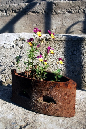 beautiful ornamental flower pot