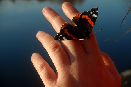beautiful butterfly sitting on a woman hand