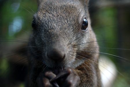 beautiful little squirrel eating a nut