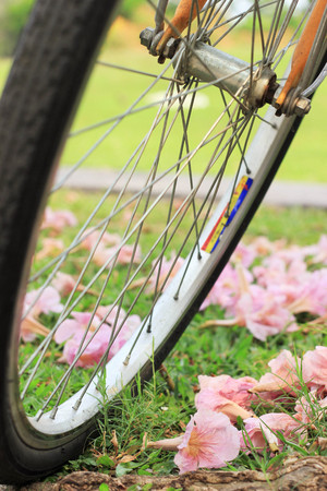 a bicycle and flowers on ground in a public park on a sunny day in Bangkok, Thailand