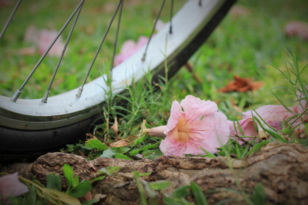 spokes: a bicycle and flowers on ground in a public park on a sunny day in Bangkok, Thailand