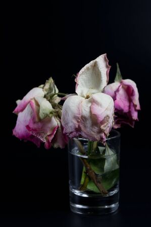 Three wilted roses on black background Imagens
