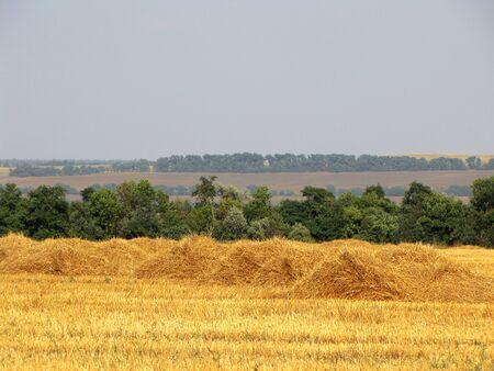 Harvest. Hay