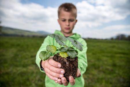 Junge hält einen Sämling der Erdbeere, bereit, es in einen Hinterhof zu pflanzen. Selbst angebautes Obst und Gemüse, biodynamische Landwirtschaft, organisches Gartenbaukonzeptfoto. Standard-Bild - 77464588