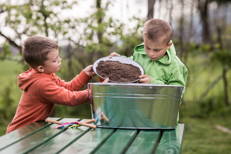 Brüder bereiten kleine Behälter vor, um Kartoffeln in zu wachsen. Familienwerte, gesundes Lebensmittel, Anheben und Heranwachsen des Konzeptfotos. Standard-Bild - 77482712
