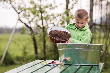 Brüder bereiten kleine Behälter vor, um Kartoffeln innen anzubauen. Familienwerte, gesundes Lebensmittel, Konzeptfoto anheben und aufwachsen. Standard-Bild - 77464592