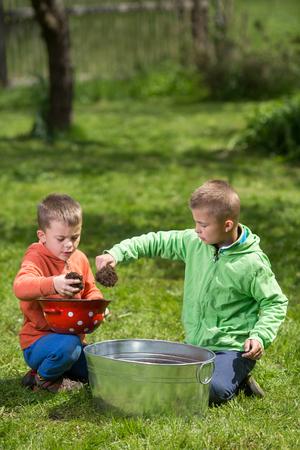 Brüder bereiten kleine Behälter vor, um Kartoffeln innen anzubauen. Familienwerte, gesundes Lebensmittel, Konzeptfoto anheben und aufwachsen. Standard-Bild - 77464593