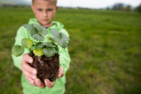 peat pot: Young boy is holding a seedling of strawberry, ready to plant it in a backyard. Home grown fruit and vegetables, biodynamic farming, organic horticulture concept photo.