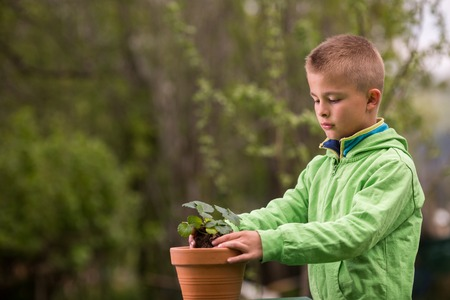 Young boy is planting a seedling of strawberry in a terracotta pot, to grow on balcony. Home grown fruit and vegetables, biodynamic farming, organic horticulture concept photo. Stock Photo