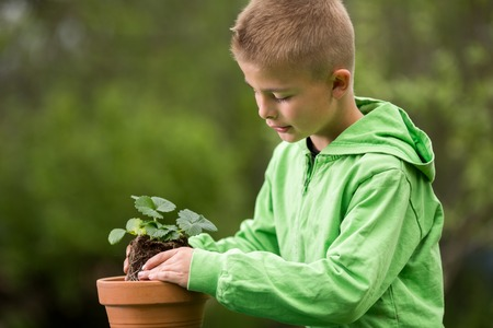 Young boy is planting a seedling of strawberry in a terracotta pot, to grow on balcony. Home grown fruit and vegetables, biodynamic farming, organic horticulture concept photo. Standard-Bild