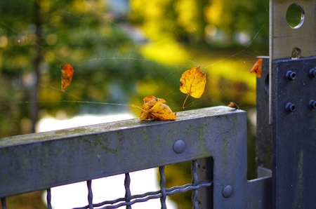 Autumn leaves on an iron fence with cobwebs