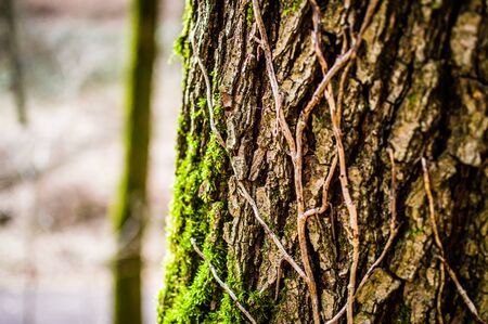 Trunk and branch of a tree in a German forest Standard-Bild