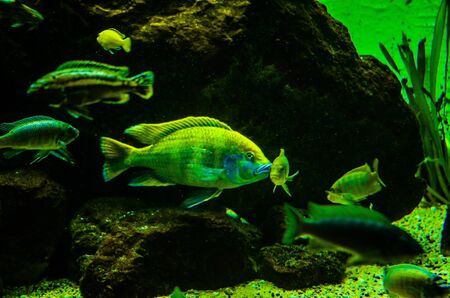 Tropical fish in a sea aquarium in the sea in blue optics