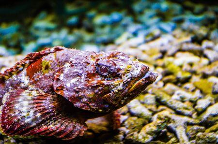 Tropical fish in a sea aquarium in the sea in blue optics Standard-Bild - 142834825