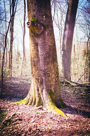 Trunk and branch of a tree in a German forest 免版税图像
