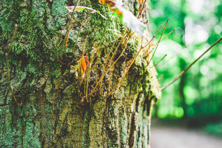 Trunk and branch of a tree with a mushroom in bright colors 免版税图像