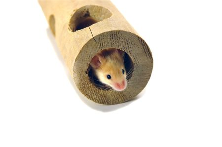 Mouse in tunnel