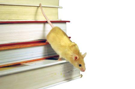 descends: Mouse descends a stack of books