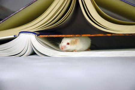 hides: Mouse hides under books Stock Photo