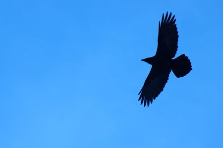 raven: Silhouette of a raven in flight Stock Photo